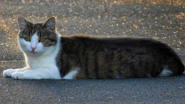 The Croydon Cat Killer: a modern urban myth